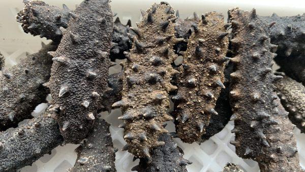 1级深海野生纯淡干辽刺参-市面上最好的野生海参