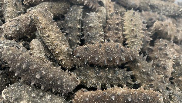 3级深海野生纯淡干海参-经济实惠型