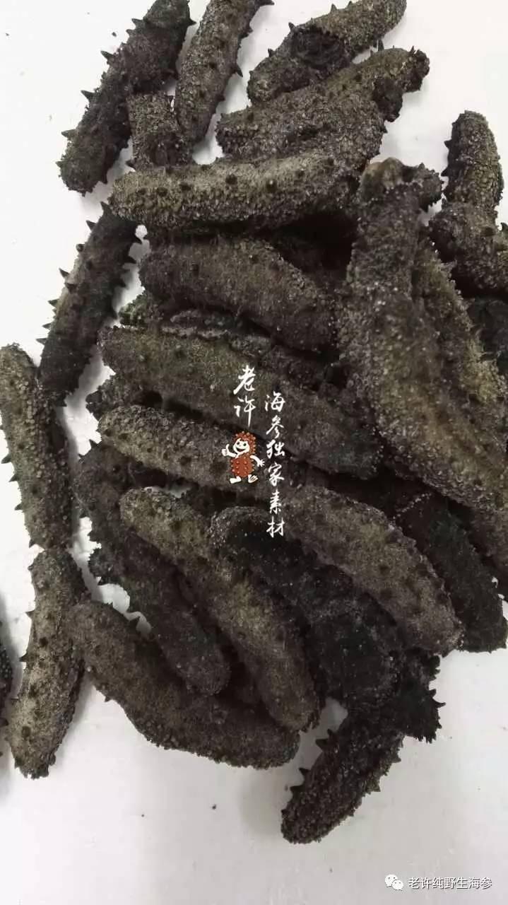 南方吊笼养殖干海参刺型1.jpg