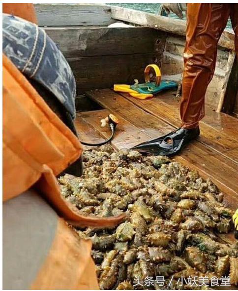 鲜海参的家常做法