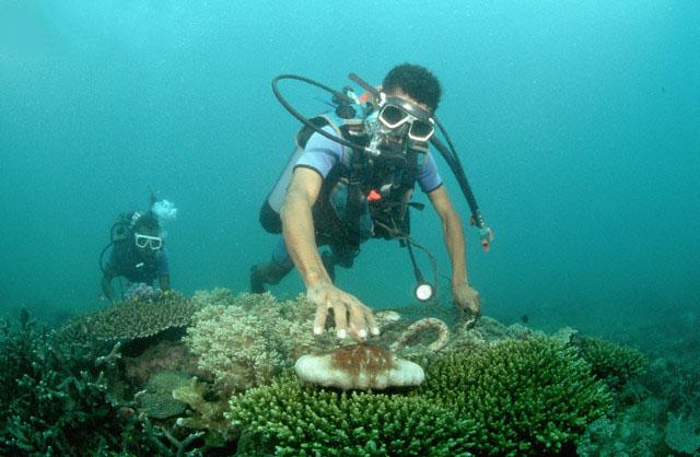 海参生活的海洋环境