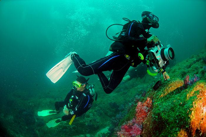 海参生活习性2