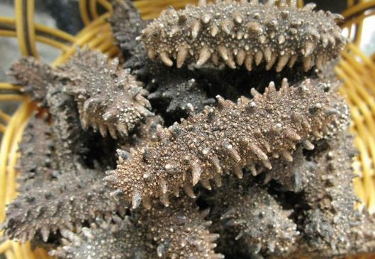 干海参怎么保存?干海参的保存方法