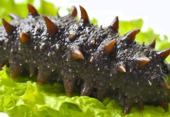 大连野生即食海参价格因素与食用注意事项