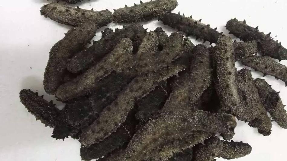 什么样的海参好?从海参的刺型特点判断海参的品质好坏