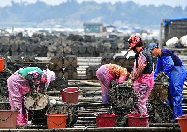 人工养殖的海参价格多少